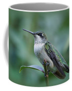 Hummingbird Close-up Coffee Mug