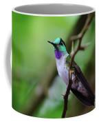 White-bellied Mountain Gem Coffee Mug