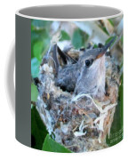 Hummingbird In Nest 2 Coffee Mug