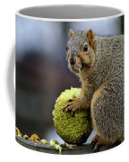 Hungry Squirrel 1 Coffee Mug