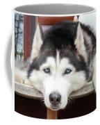 Husky Eyes Coffee Mug