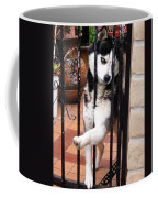 Husky Leo Focused Coffee Mug