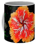 Hybrid Hibiscus II Maui Hawaii Coffee Mug