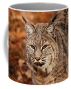 I Am One Good Looking Bobcat Coffee Mug