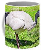 Ibis Looking For Food Coffee Mug