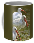 Ibis Three Coffee Mug