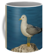 Idaho Sea Gull Coffee Mug