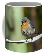 Illusive Female Bluebird Coffee Mug