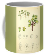 Illustrations Of The Flowering Plants And Ferns Of The Falkland Coffee Mug