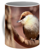 Img_0001 Brown-headed Nuthatch Coffee Mug