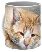 Img_0001 Cat Coffee Mug