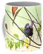Img_7541-002 - White-throated Sparrow Coffee Mug