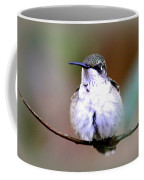 Img_8835 - Ruby-throated Hummingbird Coffee Mug