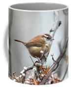 Img_9256 - Carolina Wren Coffee Mug