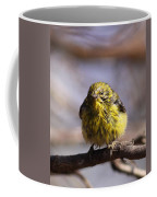 Img_9853 - Pine Warbler -  Very Wet Coffee Mug