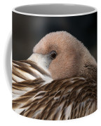 Immature Flamingo Coffee Mug