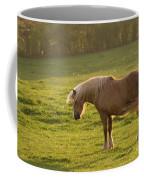 In The Light Of The Evening Sun Coffee Mug