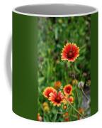 Indian Blanket Flower Coffee Mug