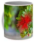Indian Bottlebrush Flower Coffee Mug