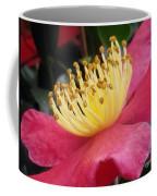 Indian Hawthorn 3 Coffee Mug