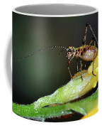 Insect And Morning Dew Coffee Mug
