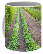 Intercropped Trees And Beans Coffee Mug