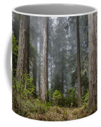 Into The Redwood Forest Coffee Mug