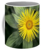 Inula Grandiflora Coffee Mug