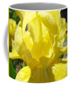 Iris Flower Yellow Macro Close Up Irises 30 Sunlit Iris Art Print Baslee Troutman Coffee Mug