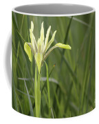 Iris Palaestina Coffee Mug