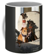Italian Greyhounds Coffee Mug
