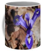 It's Spring 2010 Coffee Mug