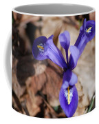 It's Spring 2010 Coffee Mug