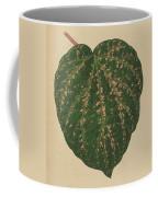 Ivy Leaf, Cissus Porphyrophyllus  Coffee Mug