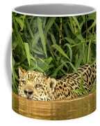 Jaguar Approaches Cayman Coffee Mug