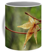 Japanese Maple In The Rain Coffee Mug