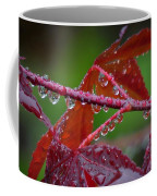 Japanese Maple On A Rainy Day Coffee Mug