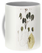Jeffersonia Diphylla Coffee Mug