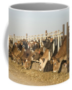 Jersey Cows Feeding Coffee Mug