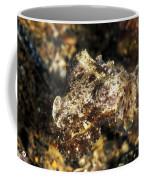 Juevinile Giant Cuttlefish Hiding Coffee Mug by James Forte