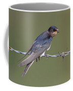 Juvenile Barn Swallow Side On Coffee Mug