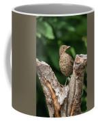 Juvenile Black Bird Turdus Merula Fledgling In Tree Stump In For Coffee Mug