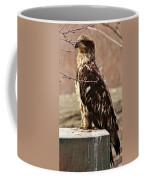 Juvenile Eagle Coffee Mug