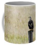 Juvenile Eagle On Post Coffee Mug