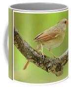 Juvenile, Female Cardinal, Animal Portrait Coffee Mug
