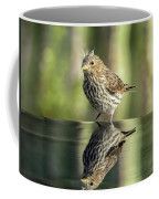 Juvenile House Sparrow 0689 Coffee Mug