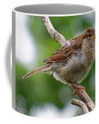 Juvenile House Sparrow Coffee Mug