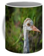 Juvenile Sandhill Crane Portrait Coffee Mug