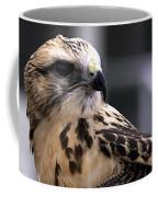 Juvenile Swainson's Hawk Coffee Mug