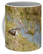 Juvenile White Ibis In The Everglades Coffee Mug